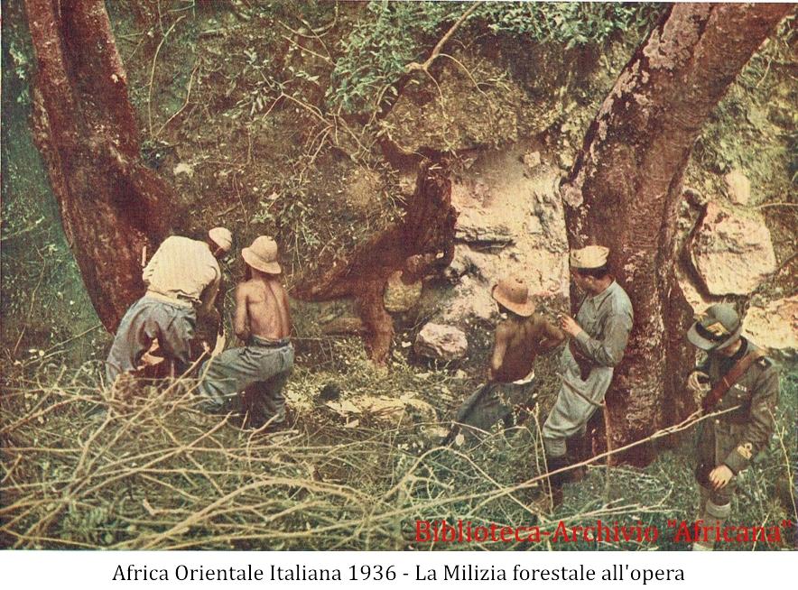 La milizia forestale