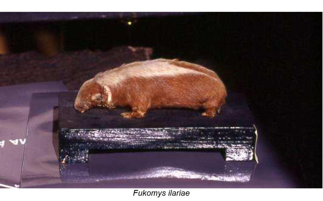 A new species of Somali mammal dedicated to Italian journalist