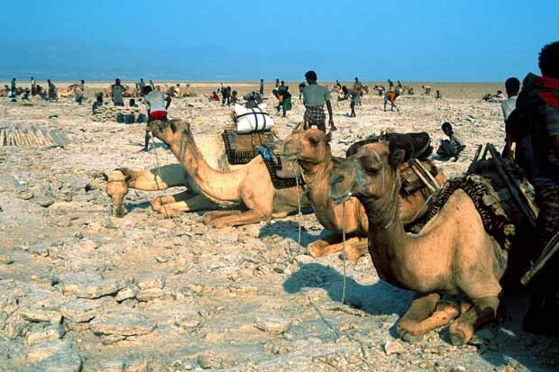 Etiopia. Le carovane del sale