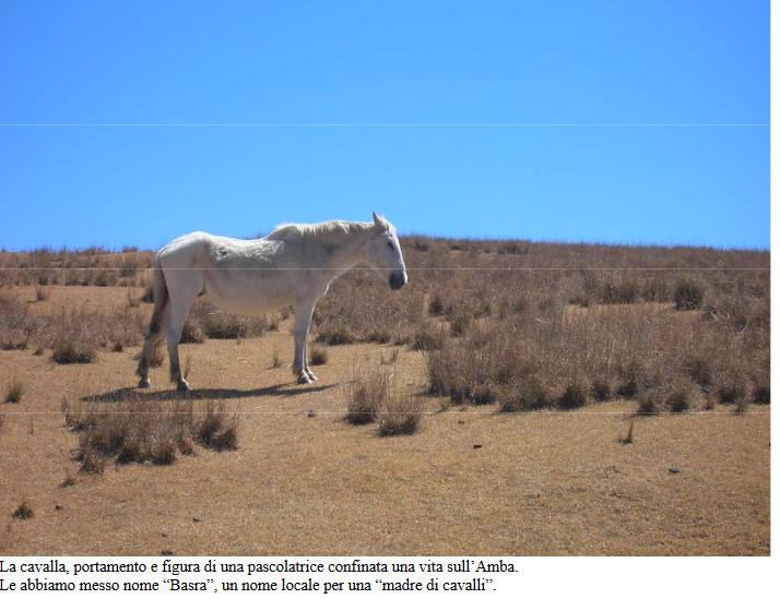 I cavalli selvaggi del Kondudo